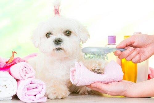 köpek bakımı ve hijyeni