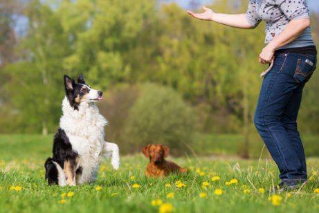 Köpeğiniz için Basit İtaat Egzersizleri