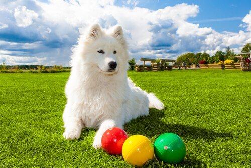 üç top ve köpek
