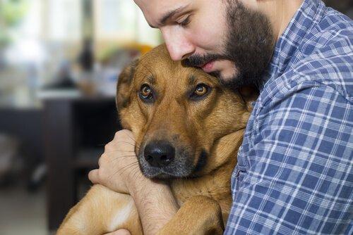 köpek ve sahibi sarılmak