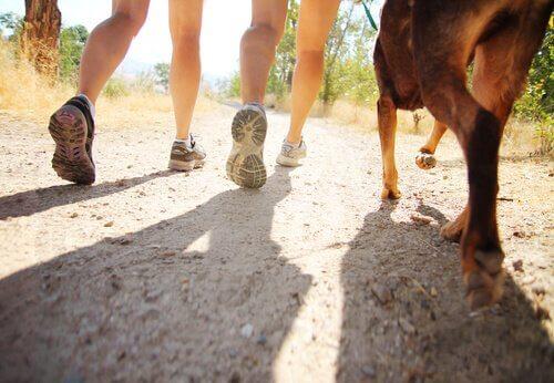 köpek ve iki insan yürüyor