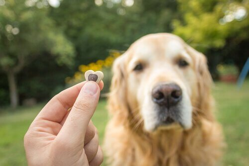 köpek ve ödül