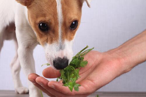 köpeğinizi beslemek