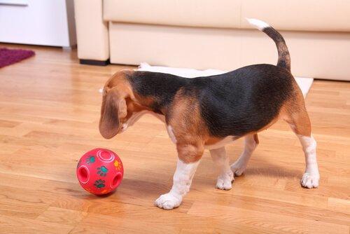köpeğinizin zekasını artıran oyuncaklar