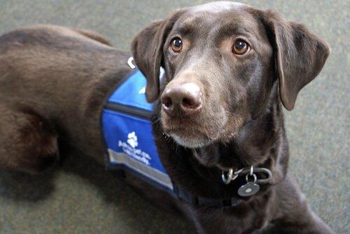 Çalışan Köpekler: 5 İş ve Özellikleri