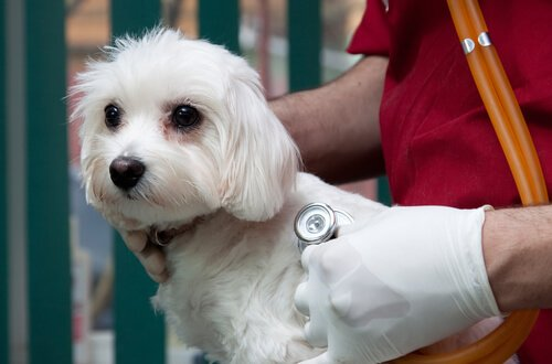 Evcil Hayvanlar için Sigorta Yaptırmalı Mısınız?