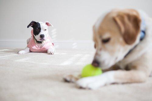 köpekler kıskançlık yapar mı