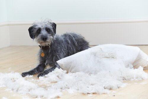 Köpeklerde 6 Davranış Problemi