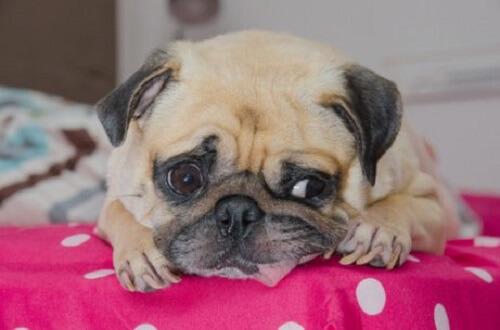 üzgün görünen köpek