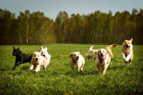 Köpeğinize Çağırıldığında Gelmeyi Öğretmek