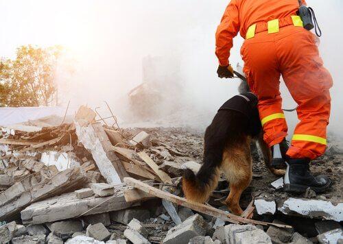 kurtarma köpekleri