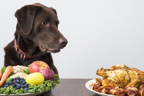 masadaki tavuğa bakan köpek ve tüy dökülmesi