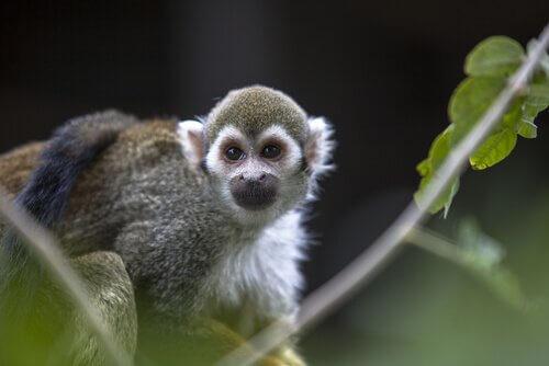 maymun çin burcu