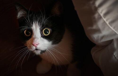 meraktan bakan kedi