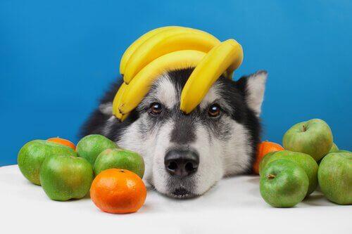 Köpeğiniz İçin Tavsiye Edilen Yaz Meyveleri