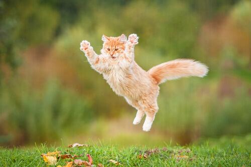 Kedinizi Mutlu Etmek İçin Ne Yapmanız Gerek?