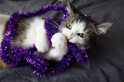 kedilerde her şeyi çiğneme sorunu