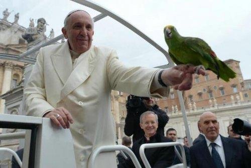 Papa Francis ve Hayvan Sevgisi