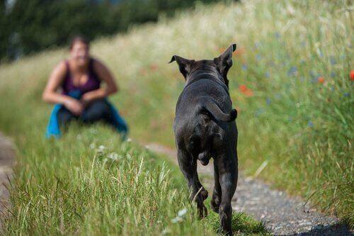 parkta sahibine doğru koşan köpek