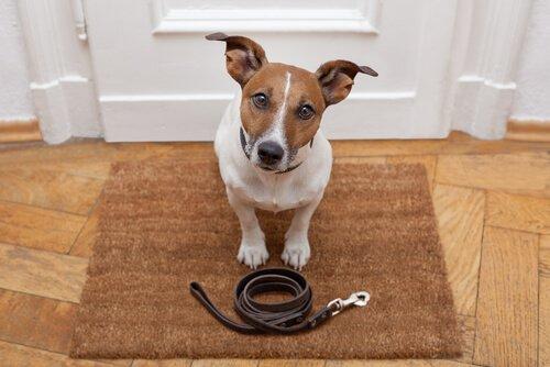Günlük Yürüyüşlerde Köpeğinizi Yönlendirmek