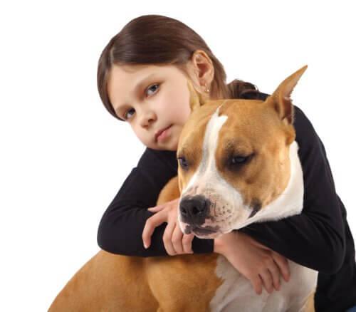 Pitbull Cinsi Köpekler Nasıl Yetiştirilir?