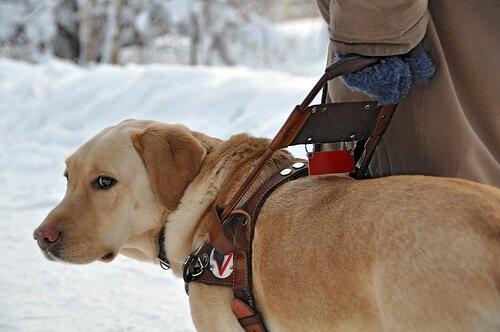 rehber köpek ve sahibi