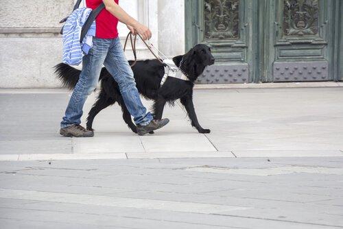 sahibiyle yürüyen rehber köpek