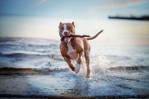 Köpekler İçin Eğlenceli Oyunlar ve Etkinlikler