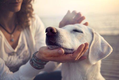 köpek seven kadın