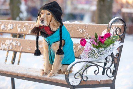 soğukta oturan şapkalı giysili köpek