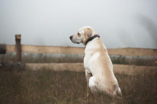 yalnız köpek