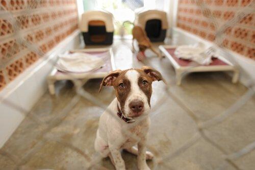 üzgün bakan köpeğiniz kaçarsa