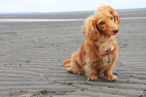 uzun tüylü köpekler için isim örnekleri