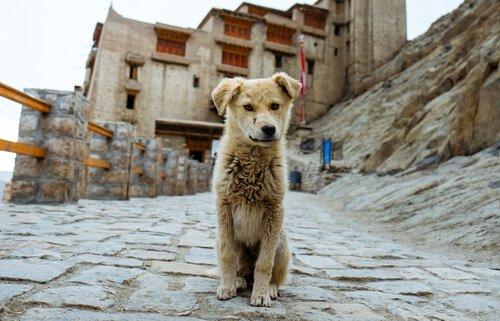 inşaatların arasında yalnız köpek