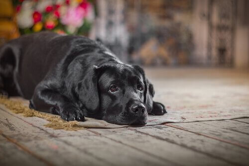 Köpekler İçin Acil Müdahale ve İlk Yardım