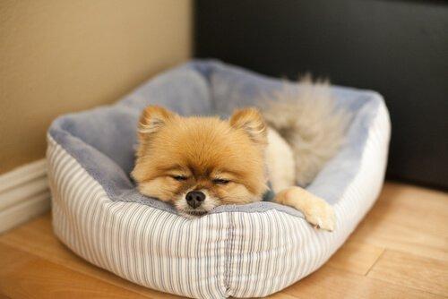 yatağında uyuyan köpek