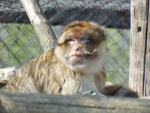 İspanya hayvan kurtarma merkezi