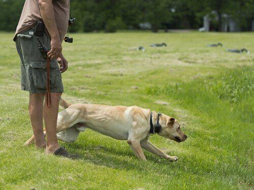 sahbiyle birlikte çimlerde köpek