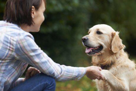 köpekli aile hayatı