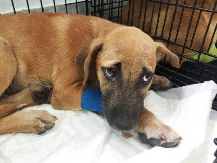 alerji yüzünden hastanede köpek