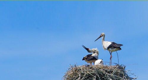 aşık kuşlar Klepetan ve Malena