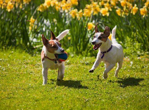 bahçede oynayan köpekler