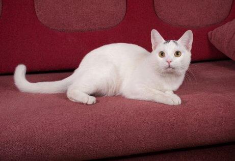 koltukta uzanan beyaz kedi