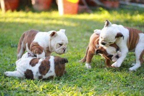 yavru köpeklerin yapmayı bilmediği şeyler
