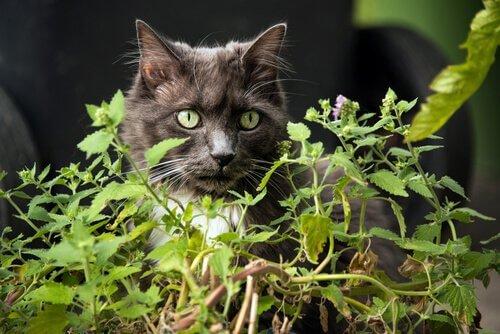 bitkinin arkasında duran kedi