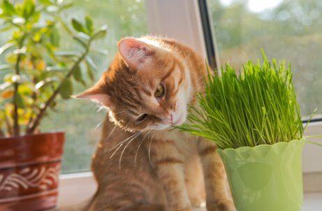 bitkiyi koklayan kedi