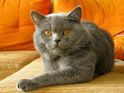 Kedinizin Kötü Davranışını Düzeltmek