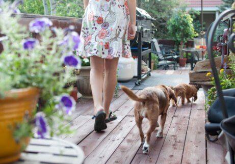 bahçede yürüyen köpekler