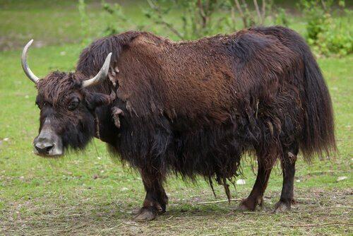 Çin Coğrafyasındaki 5 İlginç Hayvan