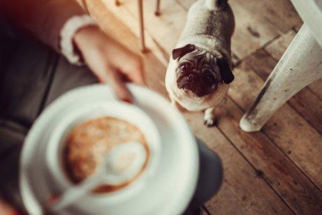köpeklere çorba içirilmesi